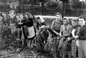 Lavorazione del tabacco (anno 1948)